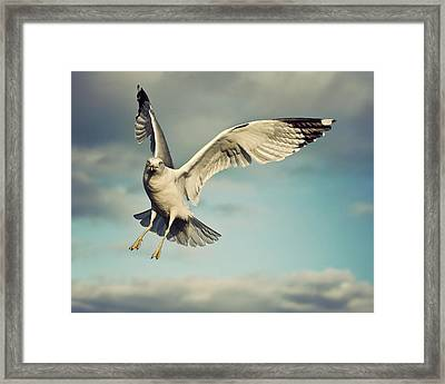 Seagull Framed Print by Jody Trappe Photography