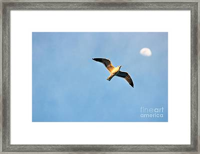 Framed Print featuring the photograph Seagull by Luciano Mortula