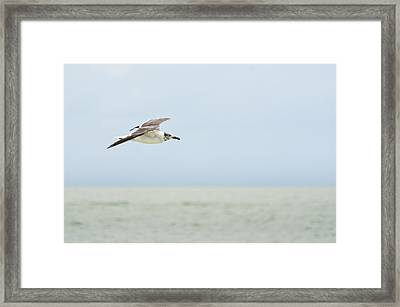 Seagull Framed Print by Mike Rivera