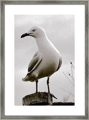 Seagull On Post Framed Print