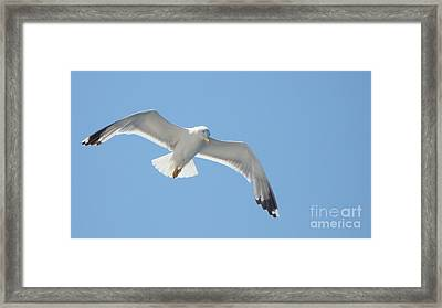 Seagull On The Sky Framed Print by Olga R