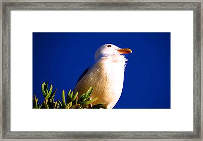 Seagull On Top Framed Print by Catherine Natalia  Roche