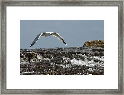 Framed Print featuring the photograph Seagull Overt The Rapids by Darleen Stry