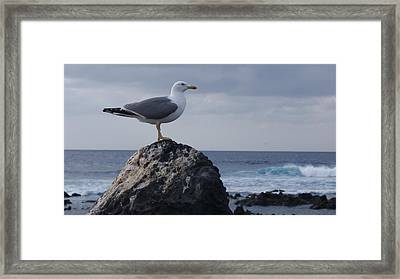Seagull Framed Print by Luis and Paula Lopez