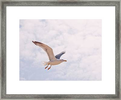Seagull Framed Print by Photos by Carol
