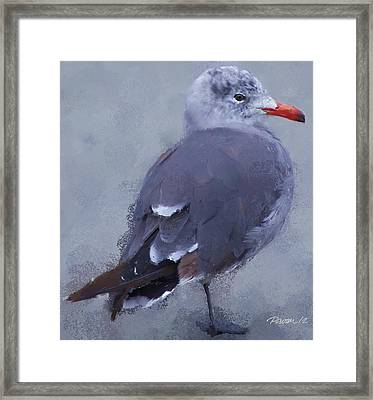 Seagull Portrait I Framed Print by Jim Pavelle