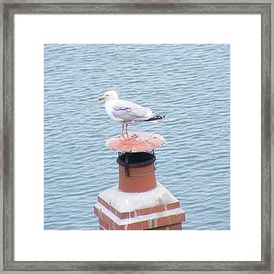 Seagull Resting On Chimney Framed Print