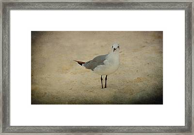 Gull Framed Print by Sandy Keeton