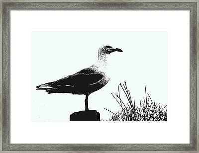 Framed Print featuring the photograph Seagull  by Serene Maisey