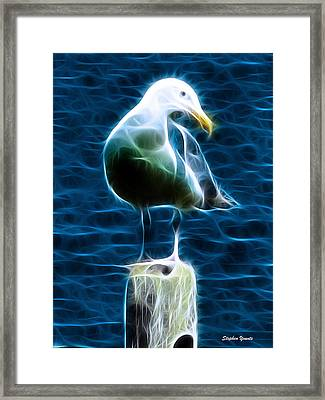 Seagull Framed Print by Stephen Younts