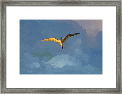 Seagull Sunrise Framed Print by Miguel Pumarejo