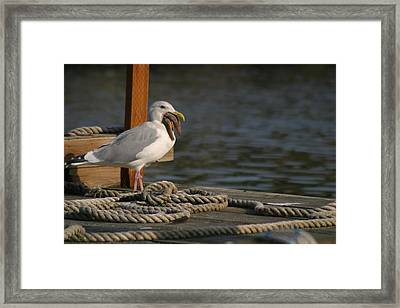 Seagull Swallows Starfish Framed Print by Kym Backland