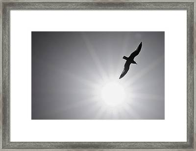 Seagull Wing Touches The Sun Framed Print by Jeramie Curtice