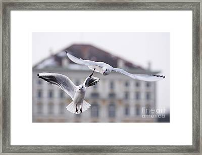 Seagulls At Nymphenburg Palace Framed Print by Andrew  Michael