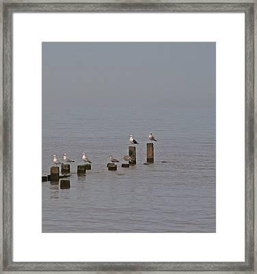 Seagulls At Rest Framed Print by Camera Rustica Bill Kerr