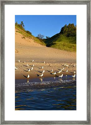 Seagulls At The Bowl Framed Print by Michelle Calkins