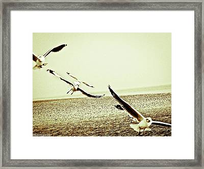 Seagulls Beneath The Wings Framed Print