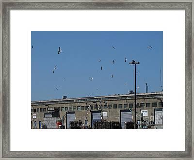 Seagulls By The Pier Framed Print by Serena Ballard