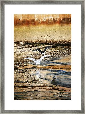 Seagulls Framed Print by HD Connelly