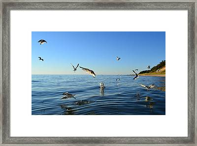 Seagulls Over Lake Michigan Framed Print by Michelle Calkins