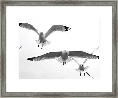 Framed Print featuring the photograph Seagulls Soaring by Lyn Calahorrano
