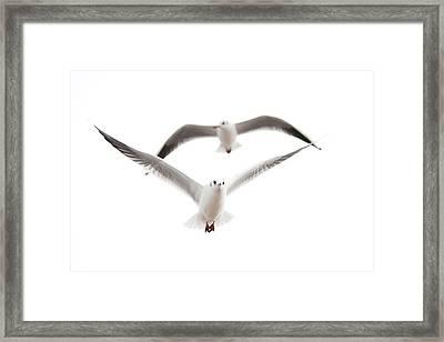 Seagulls Framed Print by Tom Gowanlock