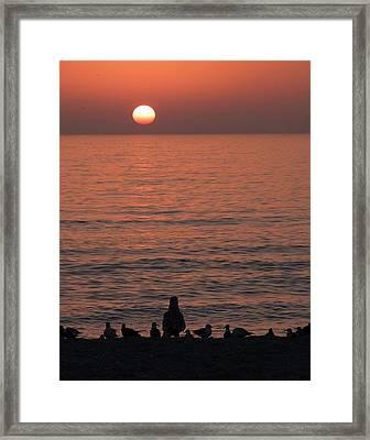Seagulls Watching Sunset Framed Print