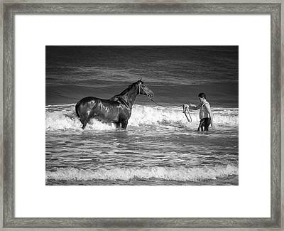 Seahorse  Framed Print by Michael Avory