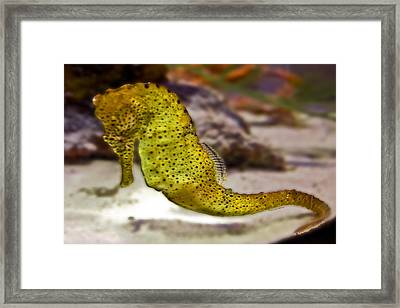 Seahorse Of Course Framed Print by DigiArt Diaries by Vicky B Fuller