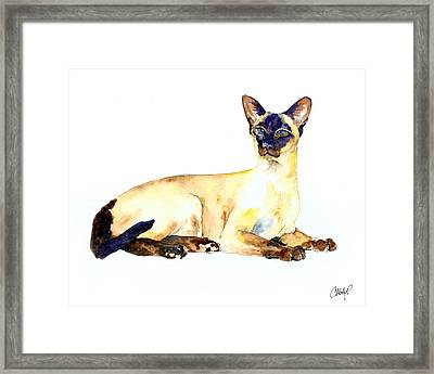 Seal Point Siamese Cat Old Framed Print