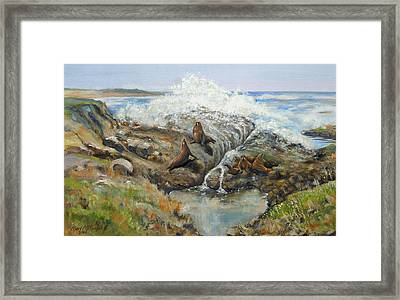 Seal Sanctuary Framed Print by Max Mckenzie
