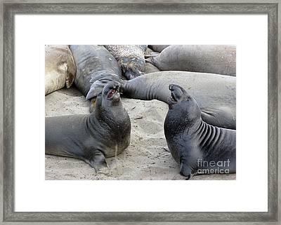 Seal Spa. Men's Talk2 Framed Print by Ausra Huntington nee Paulauskaite