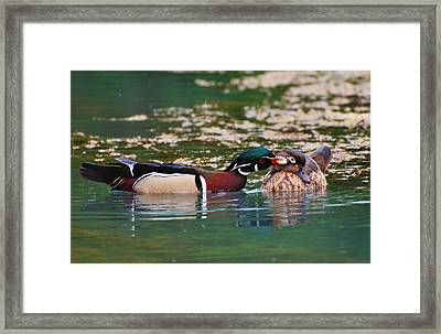 Sealed With A Kiss Framed Print by Charles Covington
