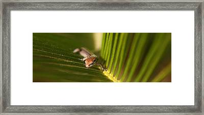 Searching Framed Print by David Paul Murray