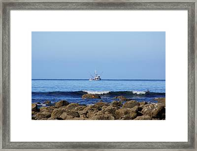 Searching For Crab Framed Print by Angi Parks