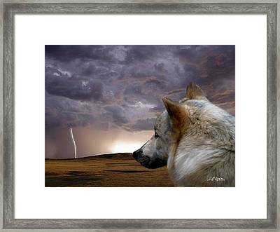 Searching For Home Framed Print by Bill Stephens