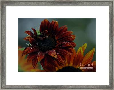 Searching For Sunshine 2 Framed Print