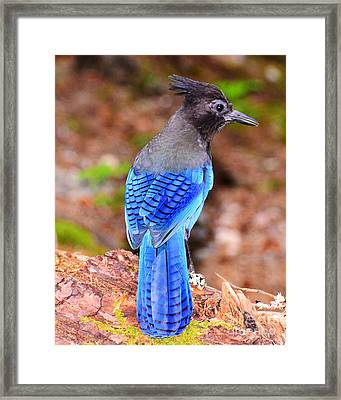 Searching Framed Print by Jack Moskovita