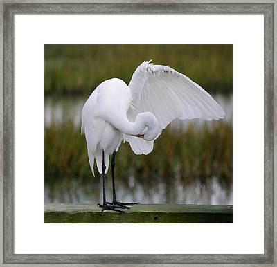 Searching Framed Print by Paulette Thomas