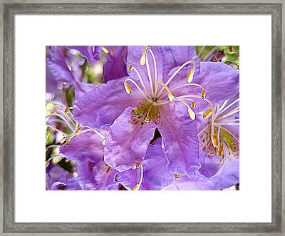 Searching Framed Print by Shirley Sirois