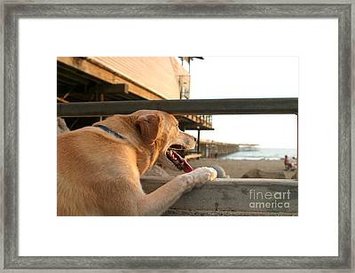 Searching The Ocean Framed Print