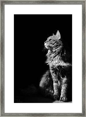Framed Print featuring the photograph Searching The Sun by Raffaella Lunelli