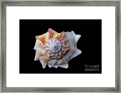 Framed Print featuring the photograph Seashell 1 by Deniece Platt