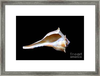 Framed Print featuring the photograph Seashell 2 by Deniece Platt