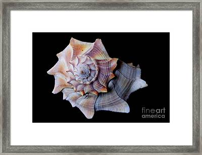Framed Print featuring the photograph Seashell 5 by Deniece Platt