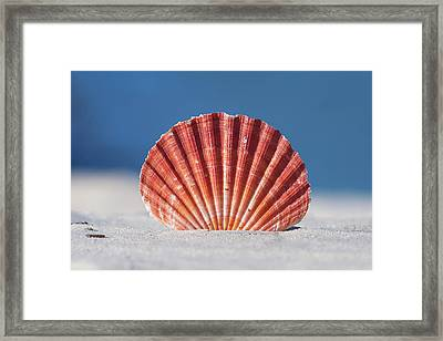 Seashell In Sand With Blue Ocean Background Framed Print by Tanya Ann Photography