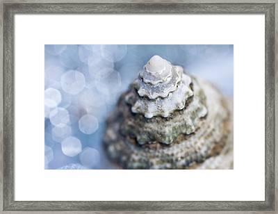 Seashell Framed Print by Lauren Tolbert Miller