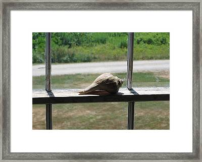 Seashell Portrait Framed Print by J R Baldini M Photog Cr