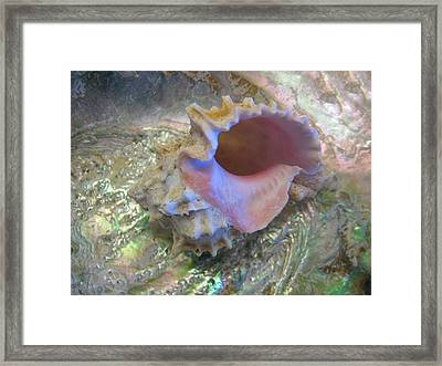 Seashell Radiance Framed Print