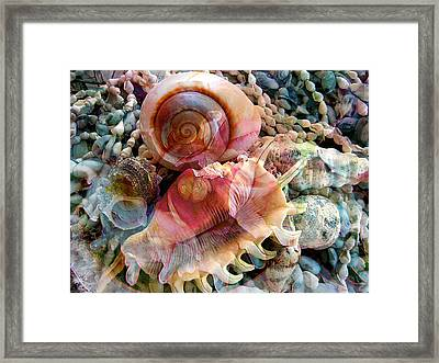 Seashell Reflections Framed Print by Shirley Sirois